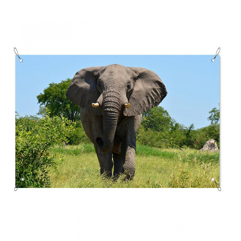 Tuinposter olifant in het veld