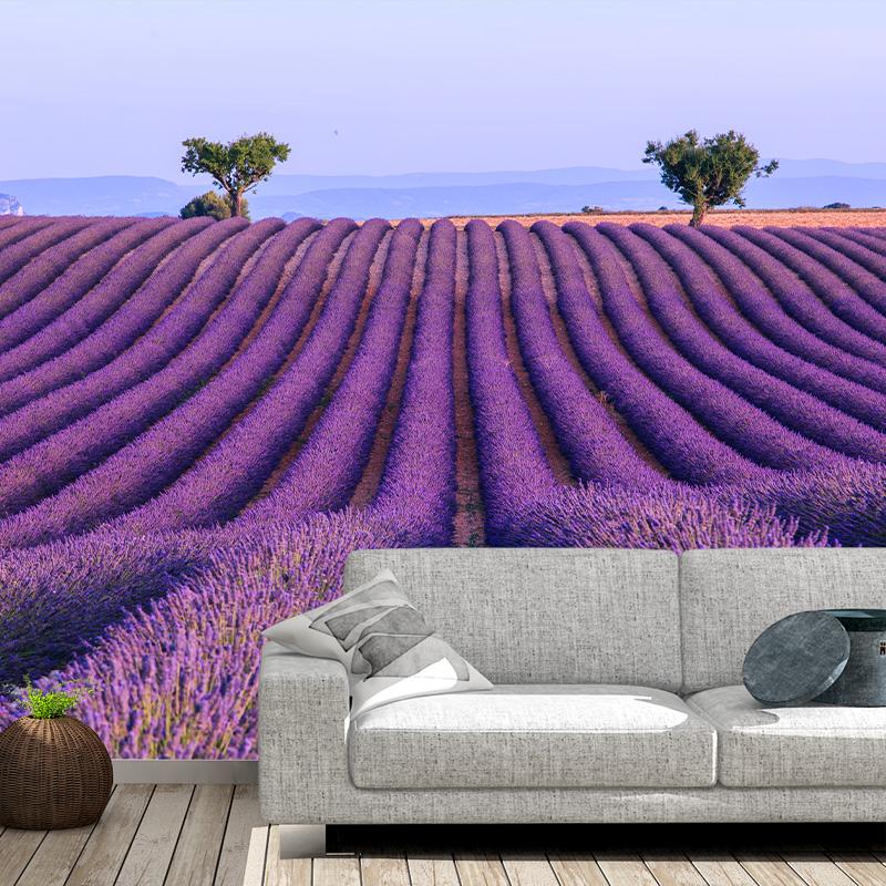 Fotobehang Lavendelveld