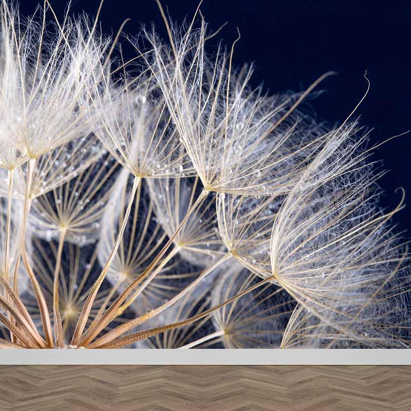 Fotobehang Dandelion in contrast