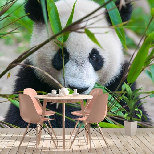 Fotobehang Schattige panda