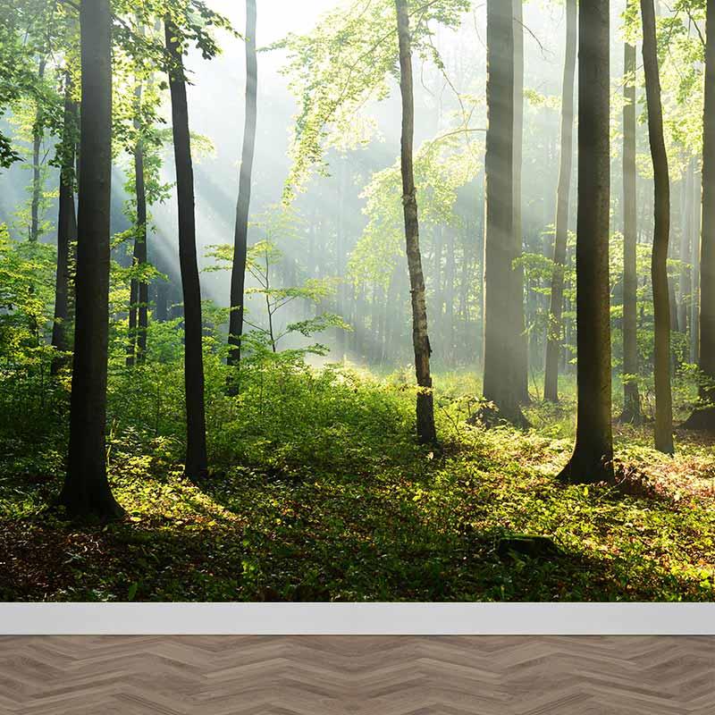 Fotobehang Zonsopgang in bos