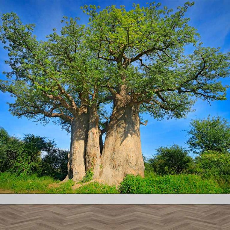 Fotobehang Oude boom in de zon