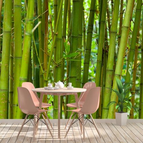 Fotobehang Groene bamboe