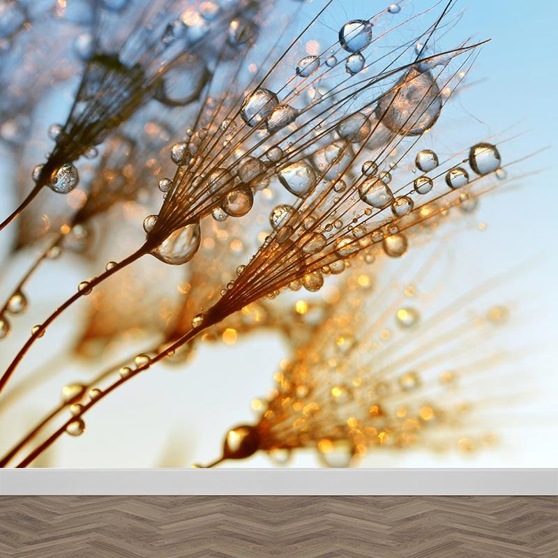 Fotobehang Paardenbloem met waterdruppels
