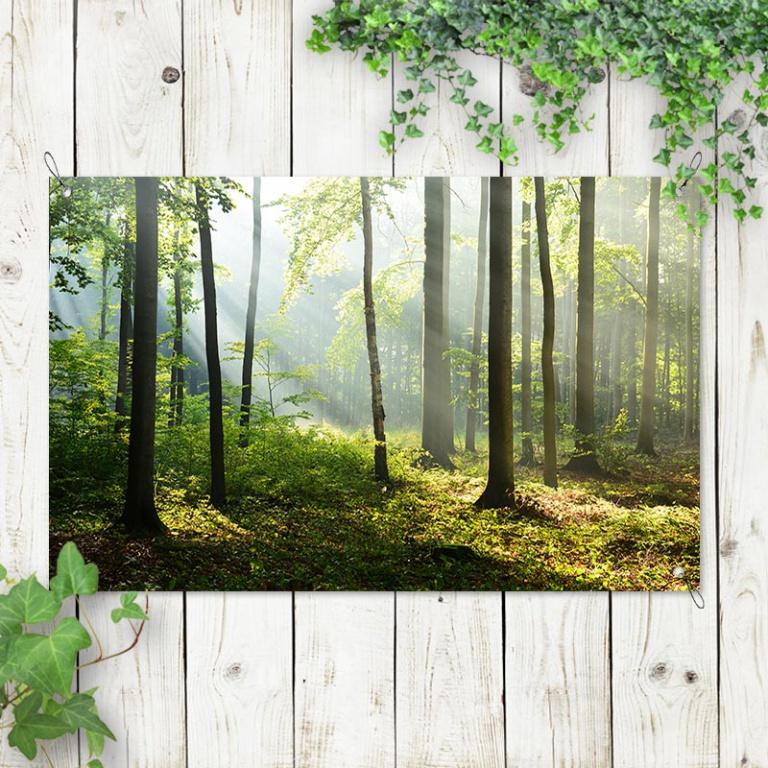 Tuinposter Zonsopgang in bos