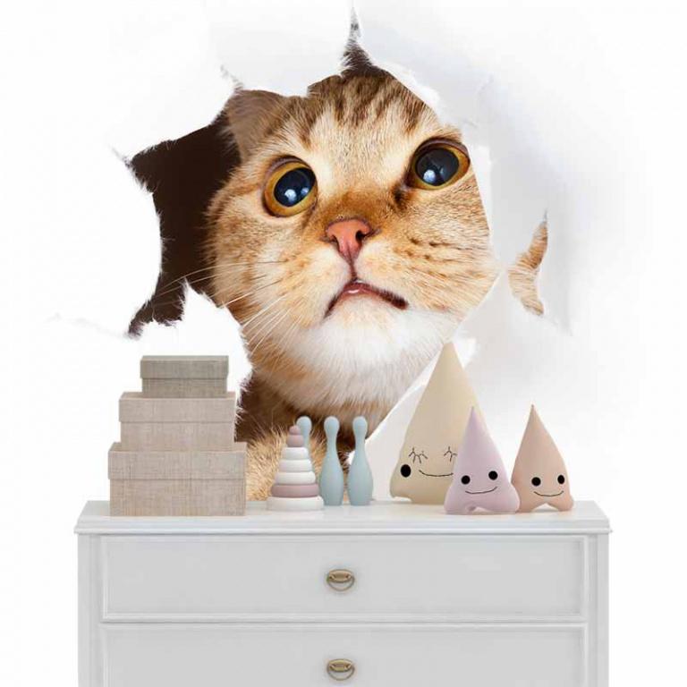 Fotobehang Nieuwsgierige kitten
