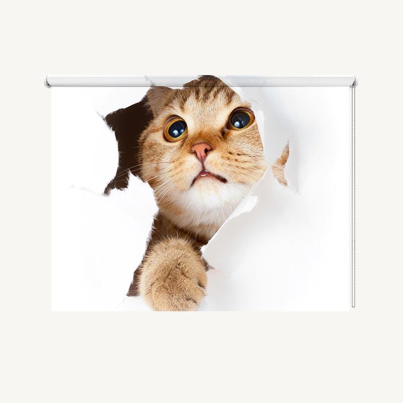 Rolgordijn Nieuwsgierige kitten