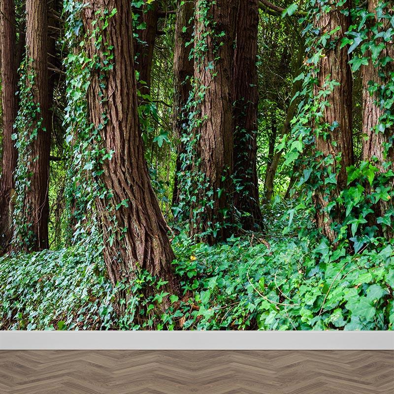 Fotobehang Bomen met klimop