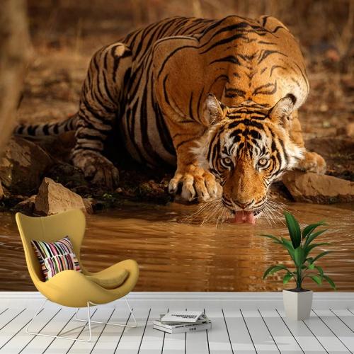 Fotobehang-Drinkende-tijger