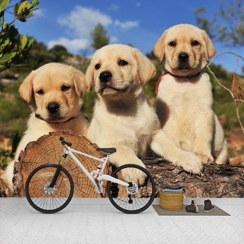 Fotobehang-Labrador-pups