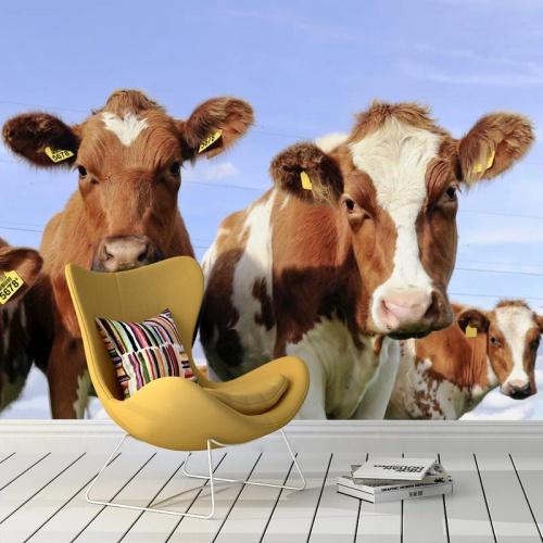 Fotobehang-Hollandse-koeien