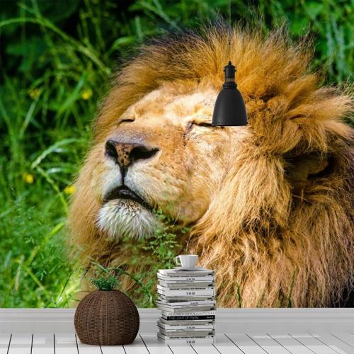 Fotobehang-Relaxte-leeuw