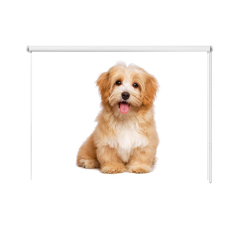 Rolgordijn Lieve puppy