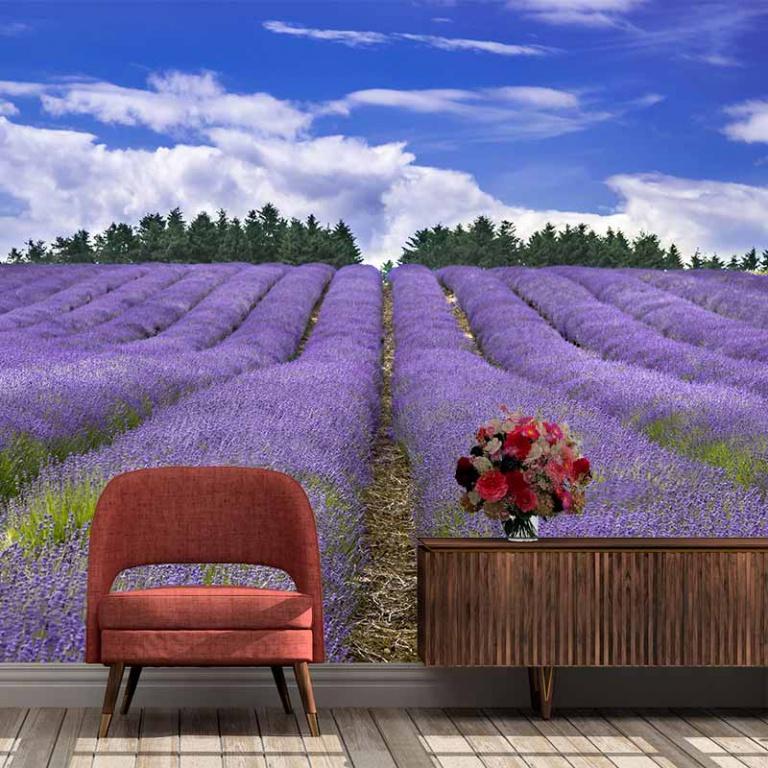 Fotobehang Uitzicht op lavendelveld