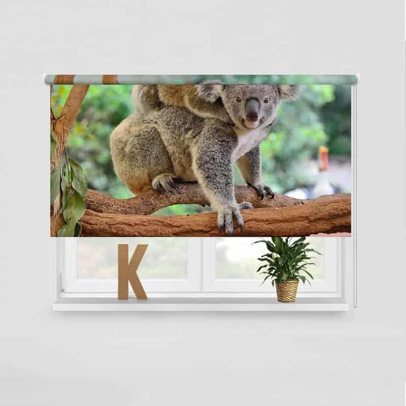Rolgordijn Koala met jong