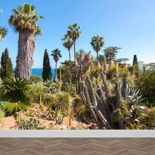Fotobehang Cactus tuin