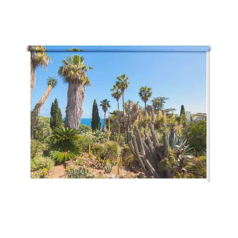 Rolgordijn Cactus tuin