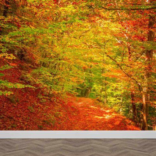 Fotobehang Bospaadje in de herfst