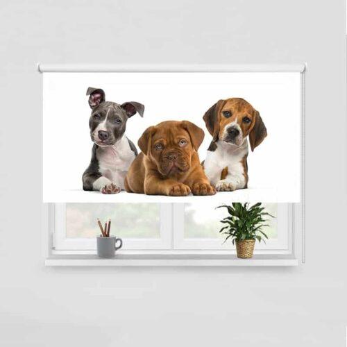 Rolgordijn 3 puppys op een rij