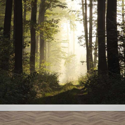 Fotobehang Aan het bospad