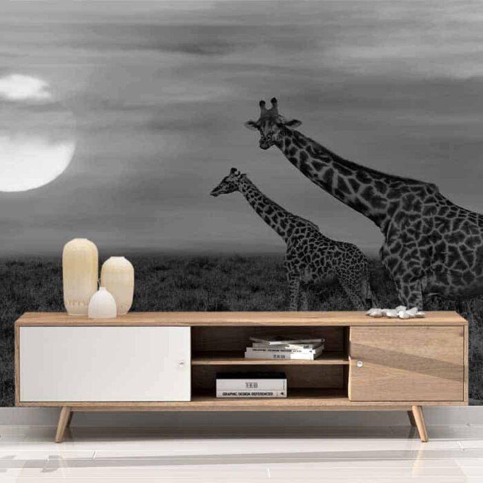 Fotobehang Giraffen in de avondschemer zwartwit
