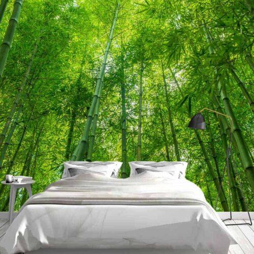Fotobehang Bamboe bomen