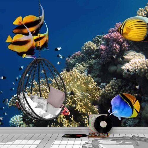 Fotobehang Tropische vissen in aquarium