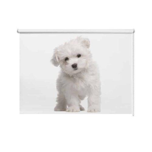 Rolgordijn Schattig wit hondje