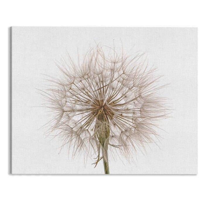Canvas Dandelion close up 2