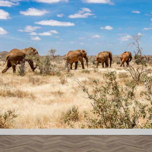 Fotobehang Olifanten in Afrika