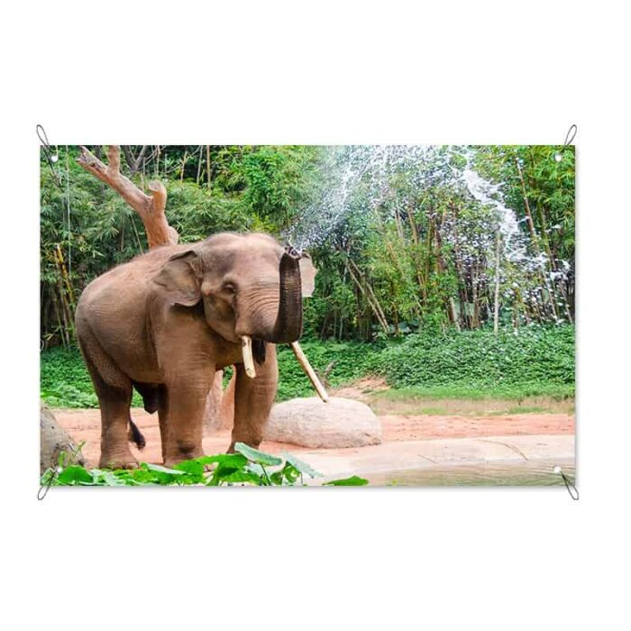 Tuinposter Olifant in de douche