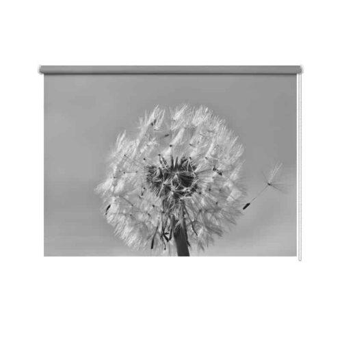 Rolgordijn Dandelion in zwartwit 2