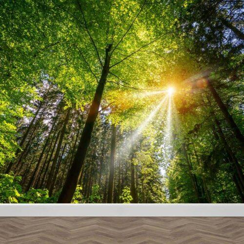Fotobehang Zonnestralen in het bos