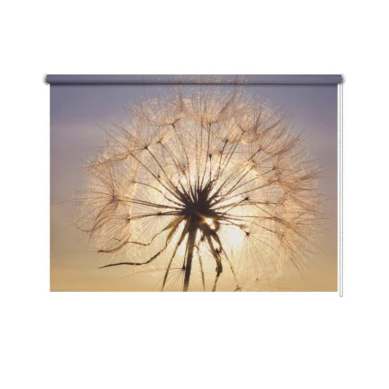 Rolgordijn Dandelion in avondschemer