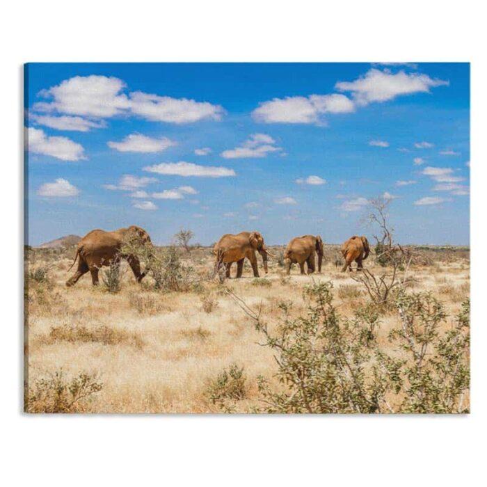 Canvas Olifanten in Afrika