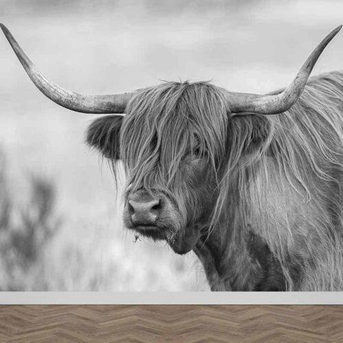 Fotobehang Schotse hooglander koe