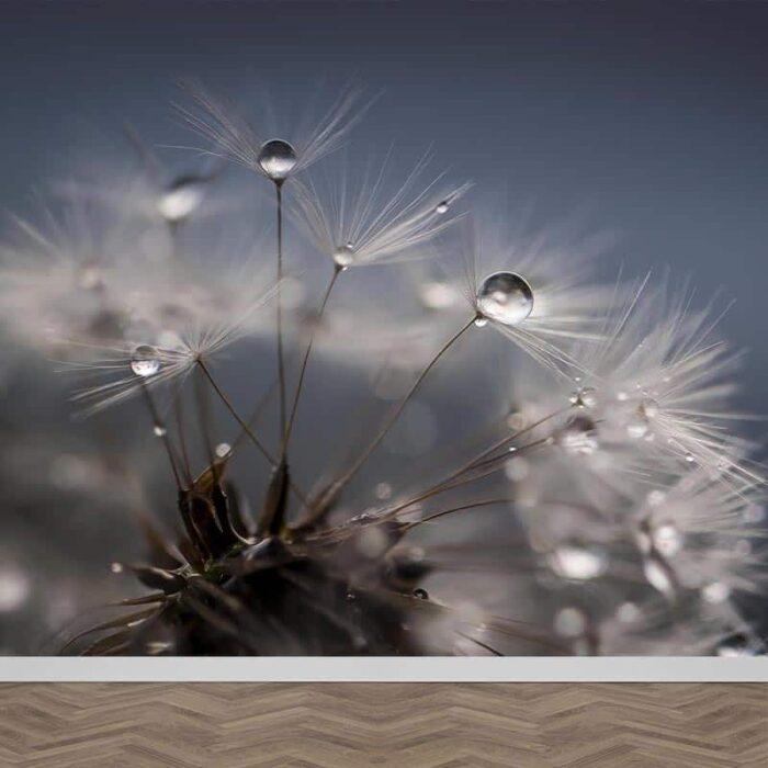 Fotobehang Dandelion met regendruppels