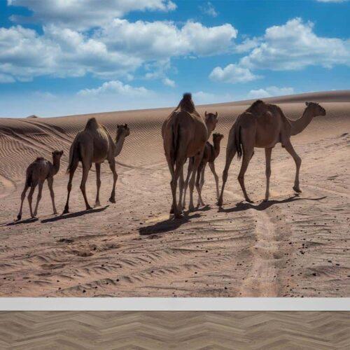 Fotobehang Dromedarissen in woestijn