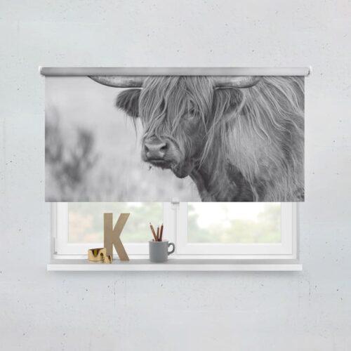 Rolgordijn Schotse hooglander koe