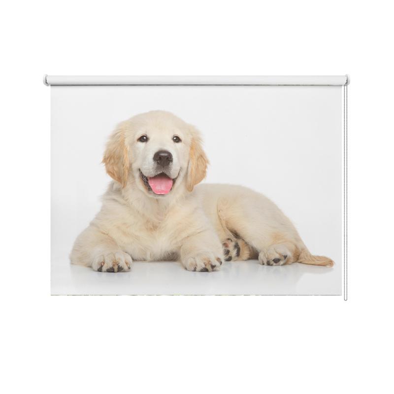 Rolgordijn Labrador puppy