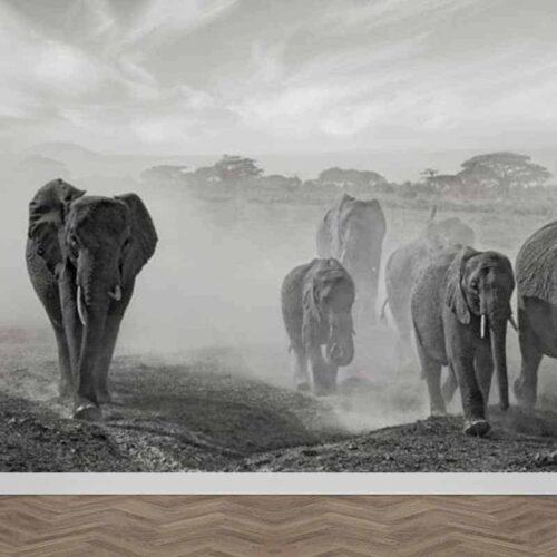Fotobehang Olifanten groep
