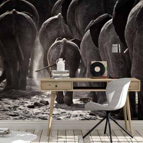 Fotobehang File van olifanten
