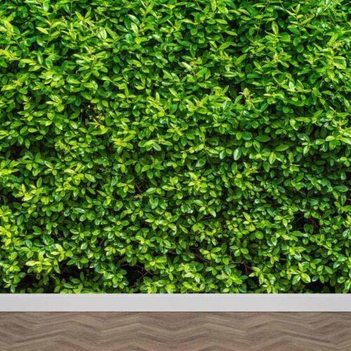 Fotobehang Tussen het groen