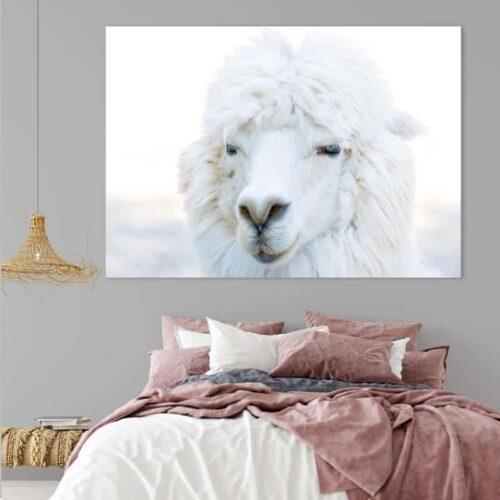 Canvas Alpaca