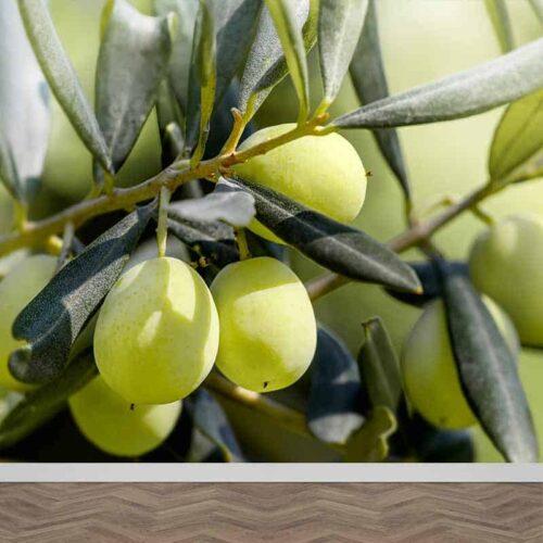 Fotobehang Groenen olijven aan tak