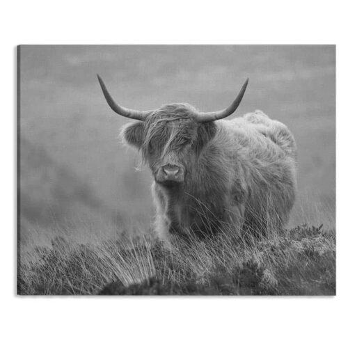 Canvas Schotse hooglander close up