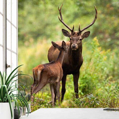 Fotobehang Herten in bos