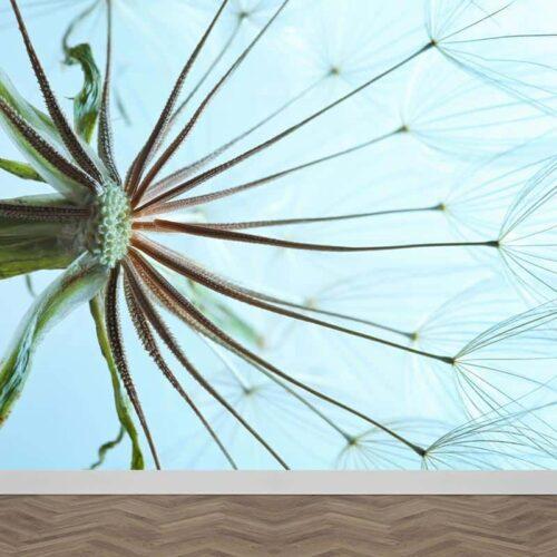 Fotobehang Dandelion in detail 3