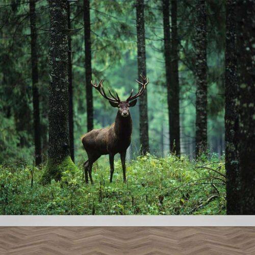 Fotobehang Damhert in bos