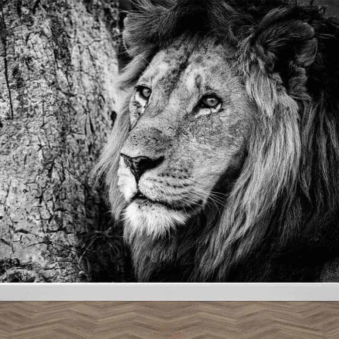 Fotobehang Leeuw zwartwit